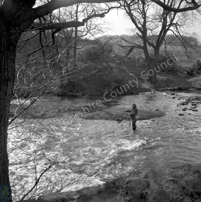 Fishing, River Nidd, Ripley, 1956